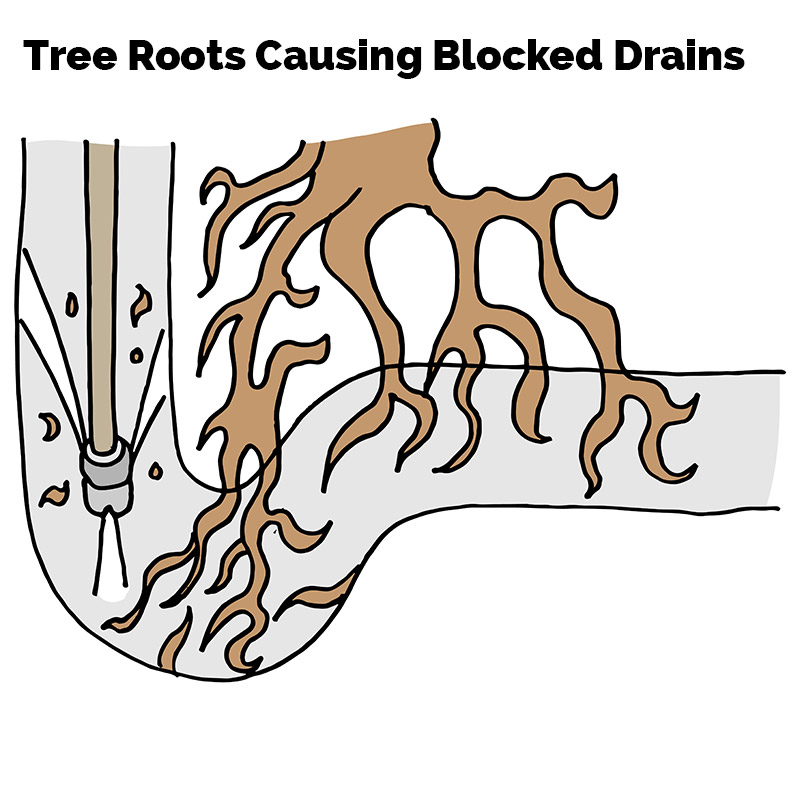Tree Roots Causing Blocked Drains
